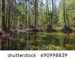 Small photo of Springtime alder bog forest with standing water, Bialowieza Forest, Poland, Europe