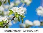 Wonderfull Pear Blossom