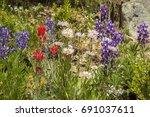 Wildflowers In An Alpine Meadow ...