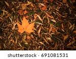 Autumn Leaves On Floor...