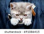 skottish straity little cute... | Shutterstock . vector #691086415
