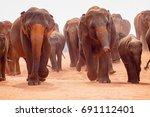 elephant   | Shutterstock . vector #691112401