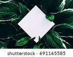 creative layout made of green... | Shutterstock . vector #691165585