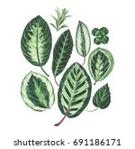 set of tropical leaves isolated ... | Shutterstock . vector #691186171