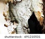 termite damage book | Shutterstock . vector #691210531