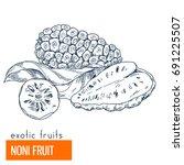 noni. hand drawn vector... | Shutterstock .eps vector #691225507