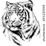tiger drawn with ink from the... | Shutterstock .eps vector #691235545