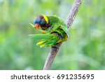 nice parrot with red beak and... | Shutterstock . vector #691235695