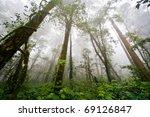 beautiful rain forest  doi... | Shutterstock . vector #69126847