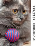 Stock photo grey cat with colorful ball 69127666