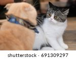 a striped cat with orange eyes... | Shutterstock . vector #691309297