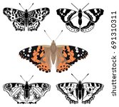butterfly collection   vector... | Shutterstock .eps vector #691310311