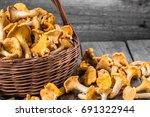 fresh chanterelles mushrooms in ...   Shutterstock . vector #691322944
