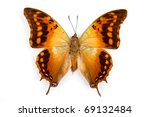 Stock photo butterfly charaxes candiope isolated on white background 69132484