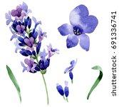Wildflower Lavender Flower In ...