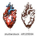 anatomical heart isolated on... | Shutterstock .eps vector #69135034