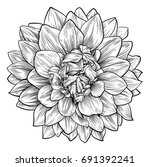 a single dahlia or... | Shutterstock .eps vector #691392241