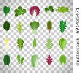 green salad leaves. vector... | Shutterstock .eps vector #691435471