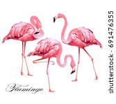 tropical bird flamingos.  | Shutterstock . vector #691476355