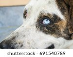 thai dog on street  dog with... | Shutterstock . vector #691540789