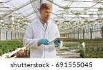 in the industrial greenhouse... | Shutterstock . vector #691555045