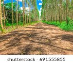 eucalyptus trees and roads. | Shutterstock . vector #691555855