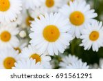 white daisy summer nature... | Shutterstock . vector #691561291