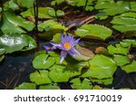 lotus in the water | Shutterstock . vector #691710019