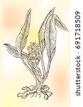 ink turmeric herbal...   Shutterstock .eps vector #691718509