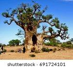 baobab senegal | Shutterstock . vector #691724101