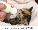 Bottle feeding a tiny orphan kitten