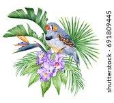 zebra finch  orchids ... | Shutterstock . vector #691809445