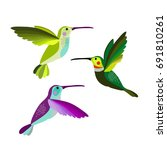 hummingbird vector illustration ... | Shutterstock .eps vector #691810261