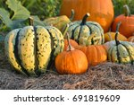 pumpkins and sqashes harvest on ... | Shutterstock . vector #691819609