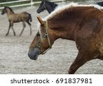 Light  Brown Horse With A Whit...