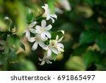 White Flower  Orange Jessamine  ...