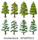 different shapes of pine trees... | Shutterstock .eps vector #691895011