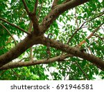 squirrel  hanging head | Shutterstock . vector #691946581