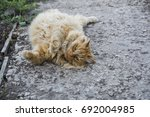 red fat cat in the street | Shutterstock . vector #692004985