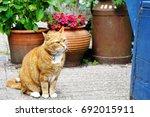 cute beautiful adorable red cat ...   Shutterstock . vector #692015911