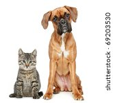 Stock photo brown cat and dog boxer breed on a white background 69203530