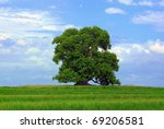 Tree and green grass. Cloudy blue sky background. - stock photo