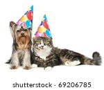 Stock photo yorkshire terrier and a norwegian forest cat in festive cones resting on a white background 69206785