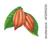 cocoa fruit   Shutterstock .eps vector #692090254