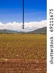 An irrigation sprinkler above a field of corn sprouts - stock photo