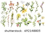 Stock photo big set watercolor elements wildflowers herbs leaf collection garden and wild forest herb 692148805