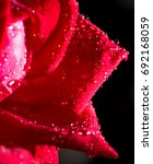 beautiful red rose on a black... | Shutterstock . vector #692168059