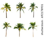 Coconut Tree White Background  - Fine Art prints