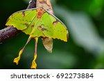 african moon moth   Shutterstock . vector #692273884