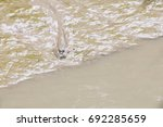 fish in the mangrove forest | Shutterstock . vector #692285659